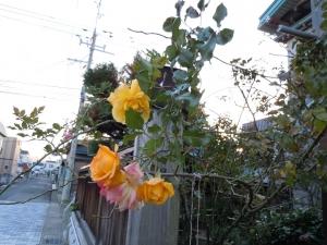 Photo_20201029222101