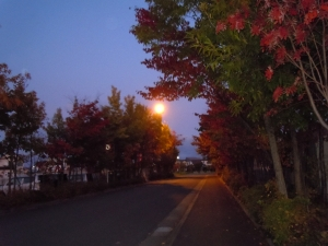 Photo_20201106224501